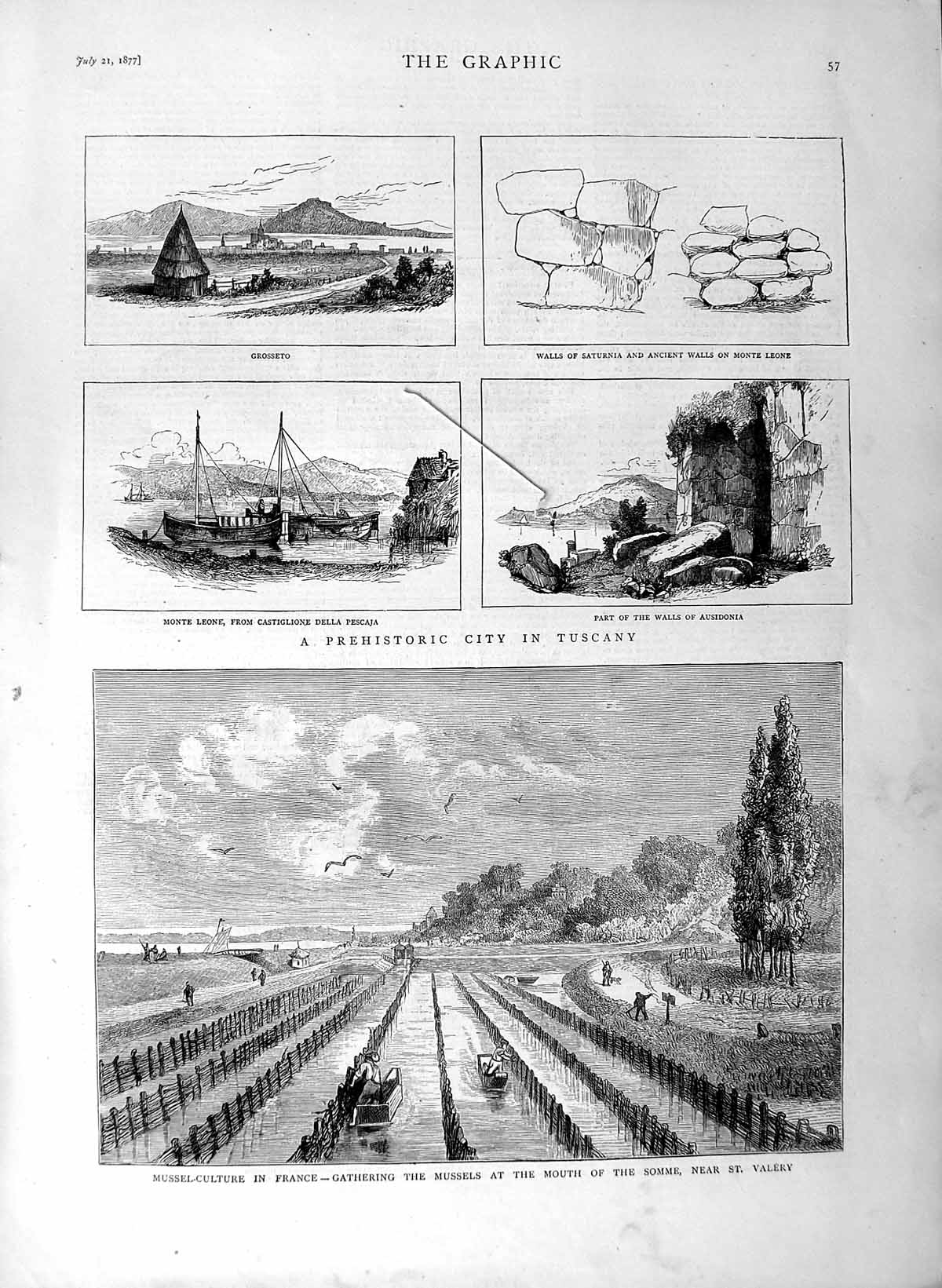 [Print 1877 Mussel Fishing France Somme Vallery Tuscany Delia 057M116 Old Original]