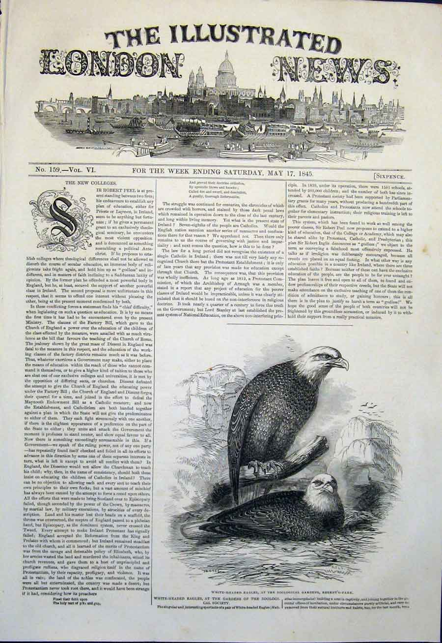 Print Eagle Eagles Zoo Garden Regent'S Park London 1845 06Maa0 Old Original