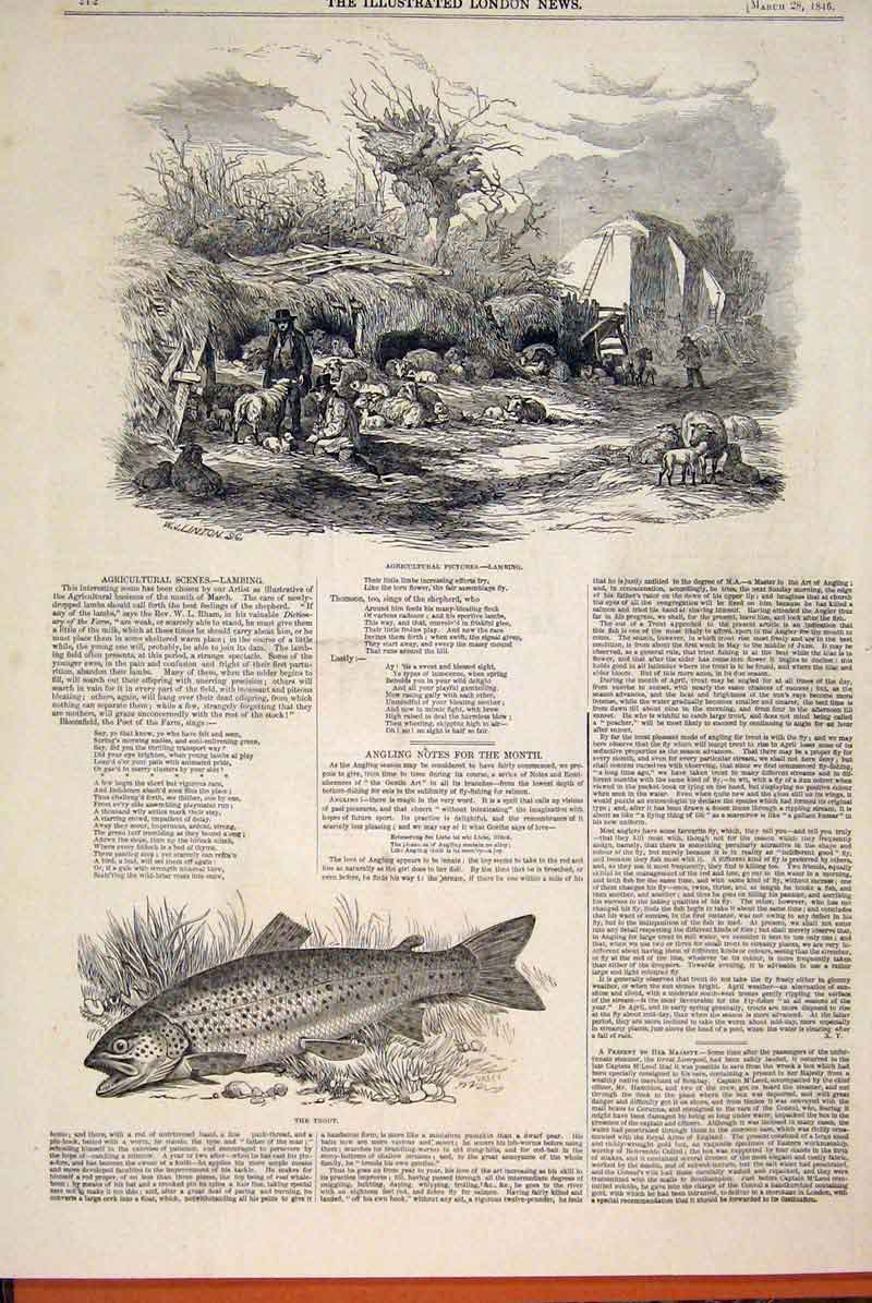 Print Lambing Agricultural Sketch Sheep Farm Fish Trout 1846 12Maa0 Old Original