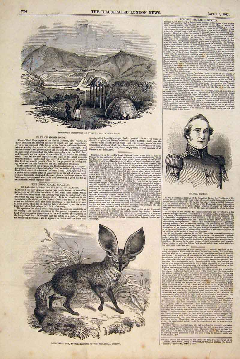 Print Mission Cape Africa Portrait Benton Loing Eared Fox Zoo 24Maa0 Old Original