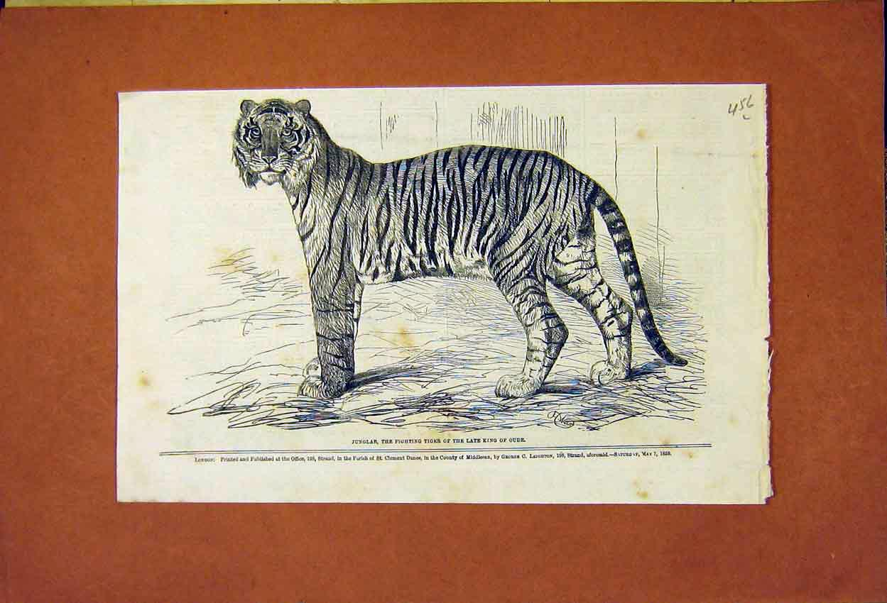 Print Junglar Fighting Tiger King Oude 1859 56Lmaa0 Old Original