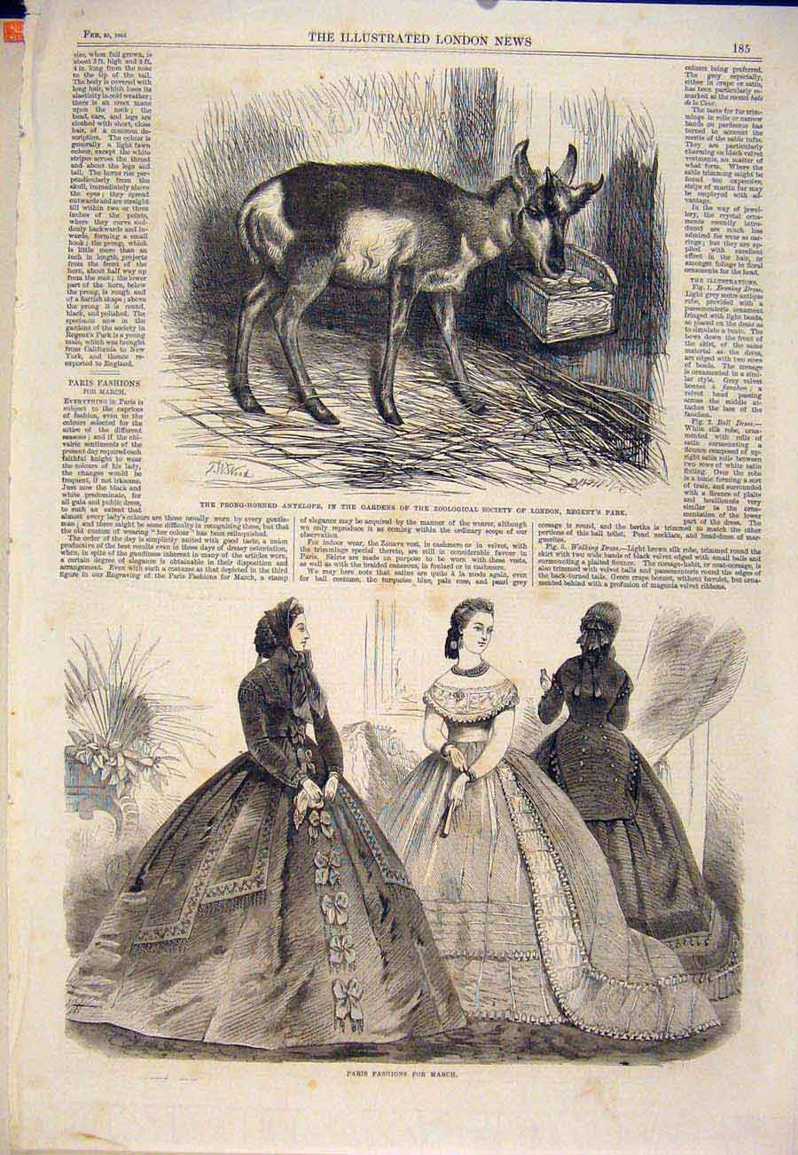 Print Antelope Zoo London Regent'S Park Paris Fashions 1865 85Maa0 Old Original