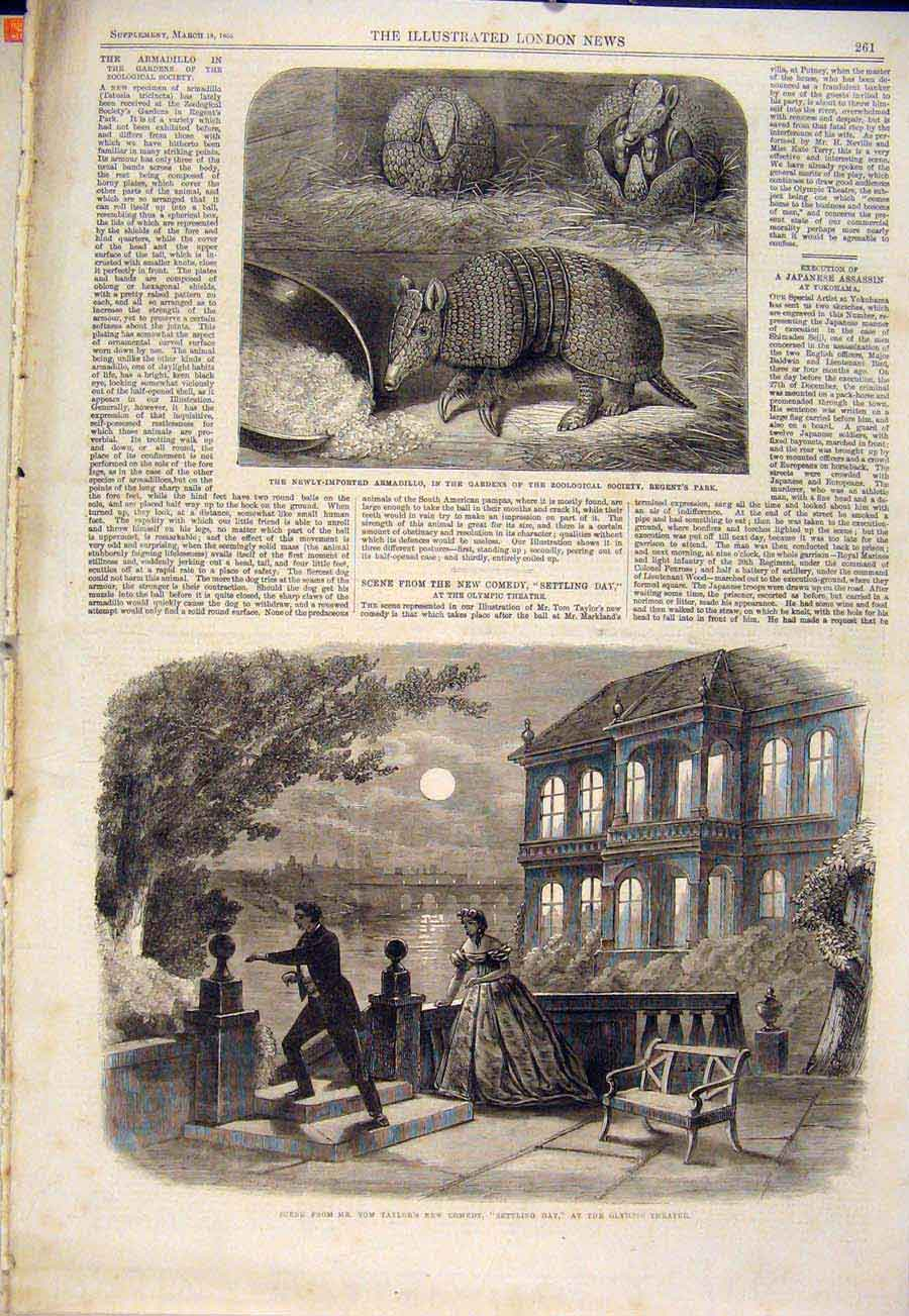 Print Armadillo Zoo Regent'S Park London Theatre Olympic 1865 61Maa0 Old Original