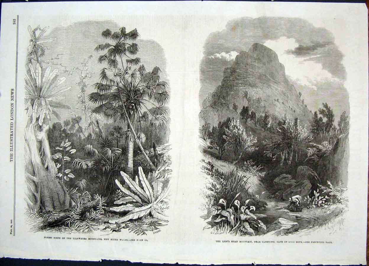 Print Illawarra Mountains Lion'S Head Africa New Zealand 85Maa0 Old Original