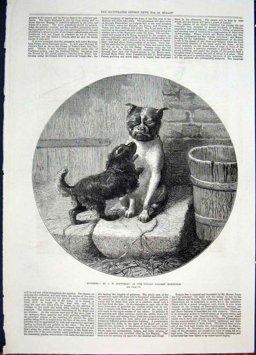 Print Bottomley Dog Dogs Exhibition Bottomley Fine Art 1872 77Maa0 Old Original