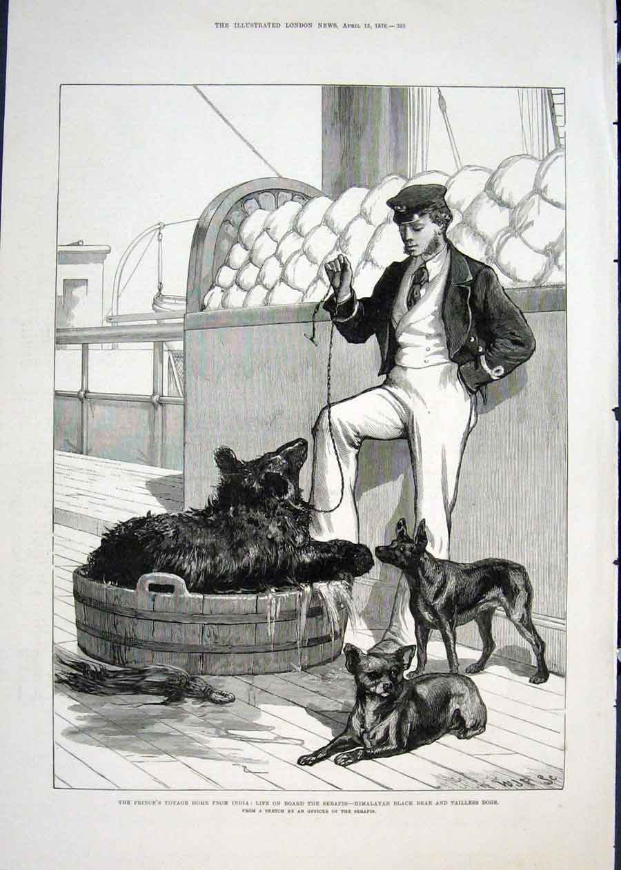 Print India Voyage Serapis Himalayan Black Bear Dogs 1876 68Maa0 Old Original