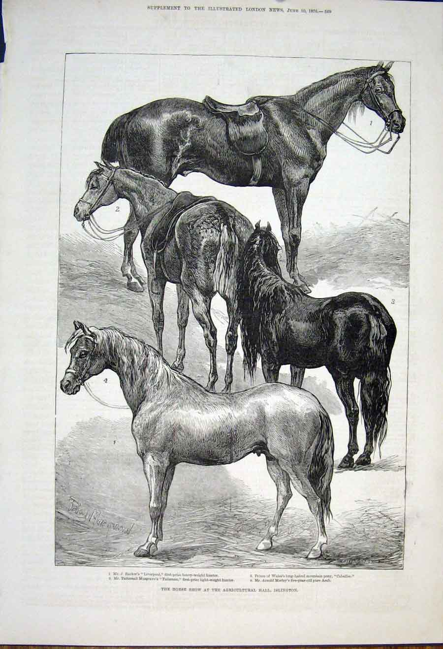 Print Horse Show Agricultural Hall Islington Horses 1876 69Maa0 Old Original