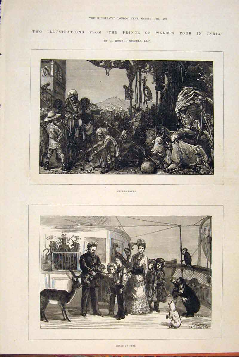 Print India Prince Wales Russell Madras Races Pets 1877 93Maa0 Old Original