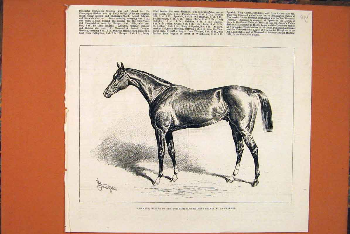 Print Chamant Racehorse Stakes Newmarket Races 1877 45Lmaa0 Old Original