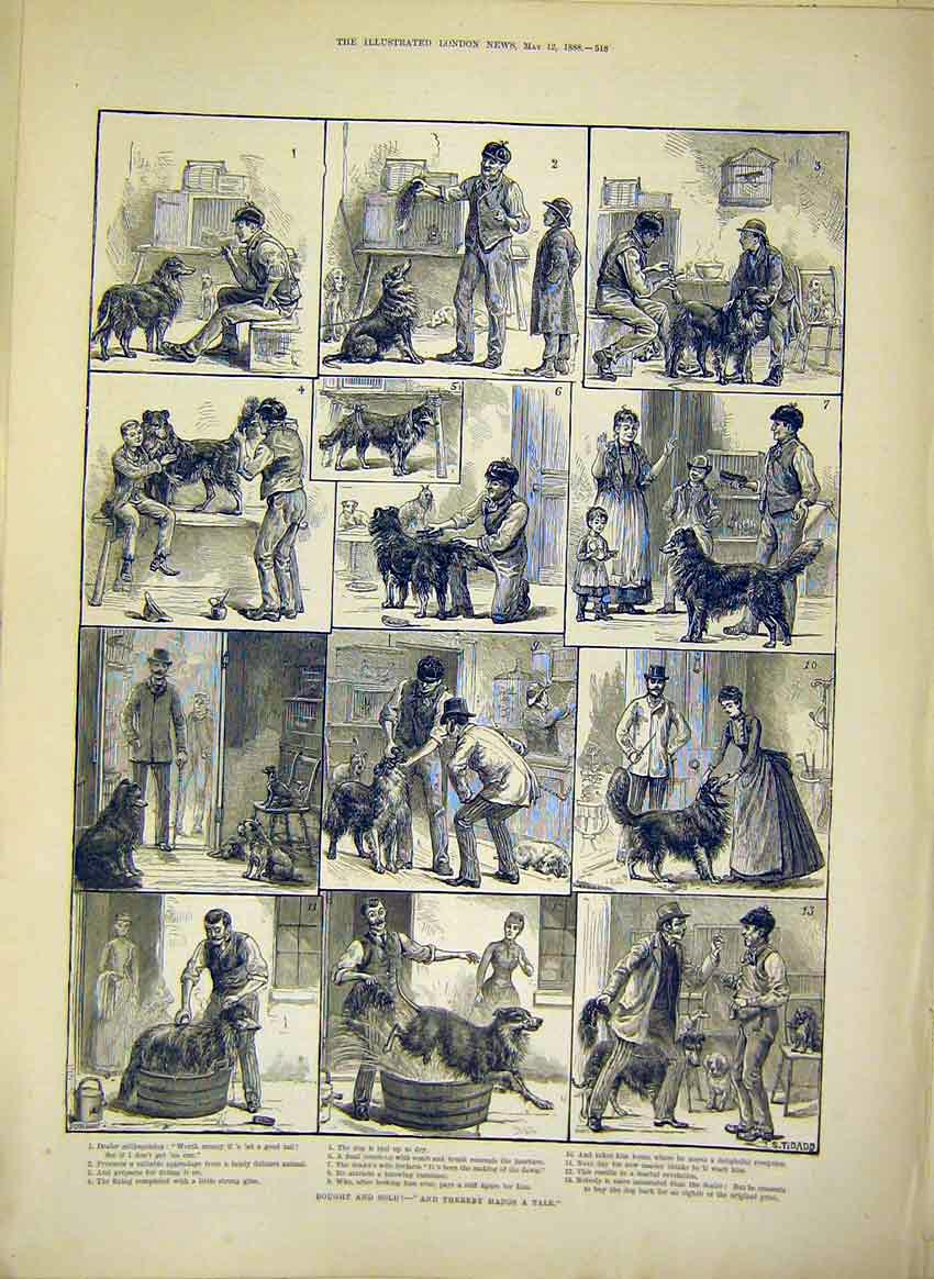 Print Dog Tale Tail Story Animal Dadd 1888 18Maa0 Old Original