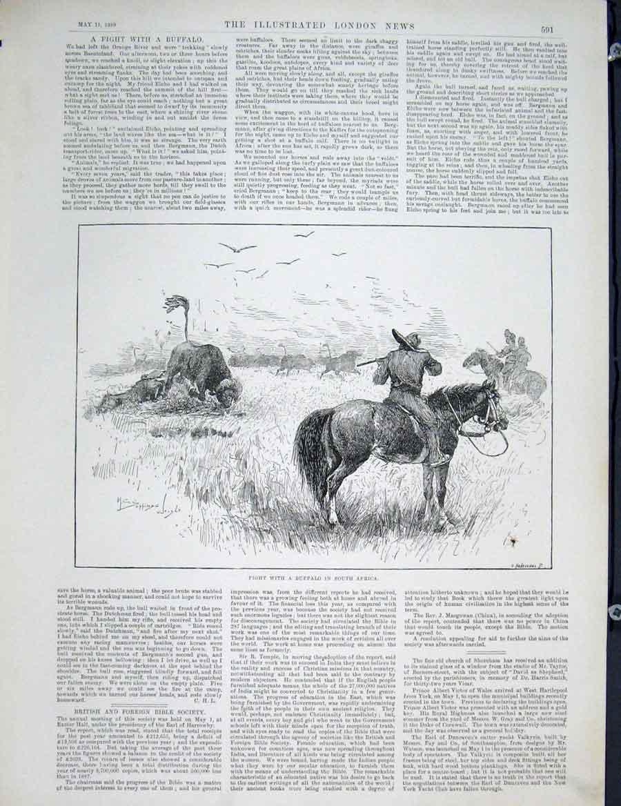 Print Buffalo Fight South Africa Basutoland 1889 91Maa0 Old Original