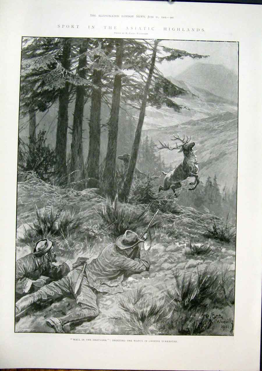 Print Asiatic Highlands Hunting Sport Shoot Wapiti Chinese 01Maa0 Old Original