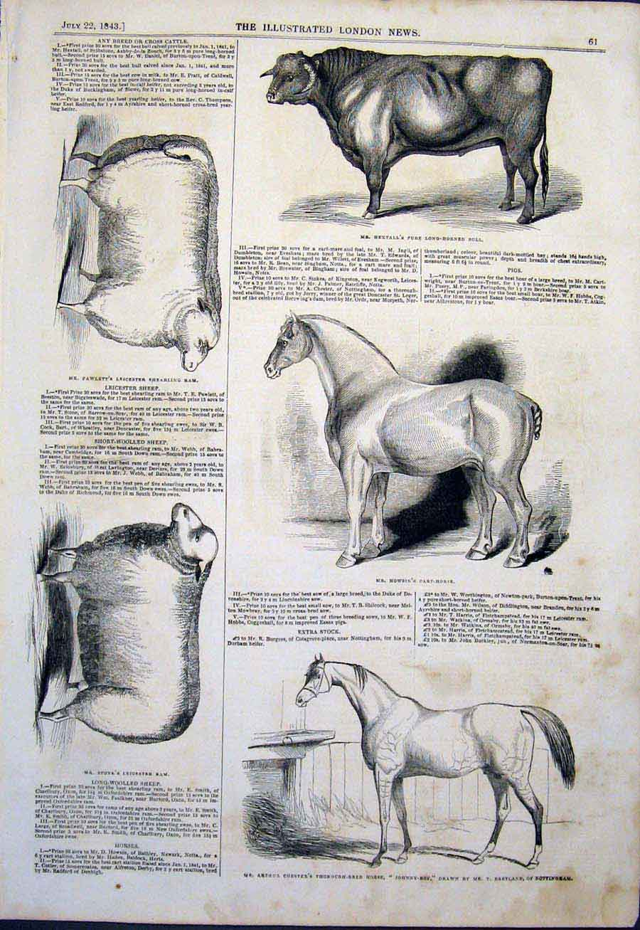Print Agricultural Show Horse Bull Cattle Sheep Ram 1843 61Maa1 Old Original