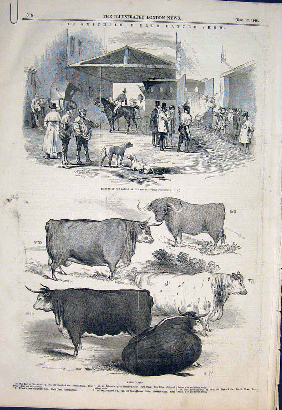 Print Smithfield Cattle Show Bazaar Sheep 1846 76Amaa1 Old Original