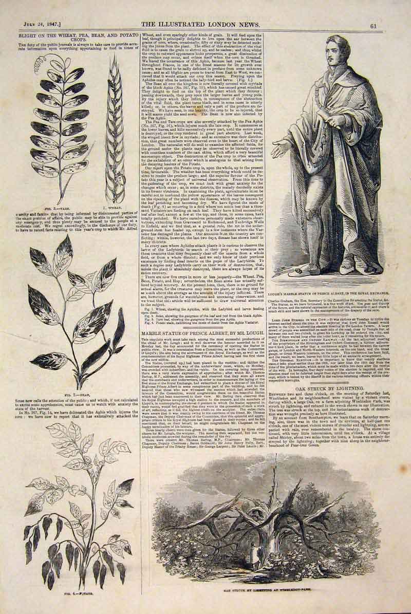 Print Lough Statue Prince Albert Blight Wheat Bean Potato Oak 61Maa1 Old Original