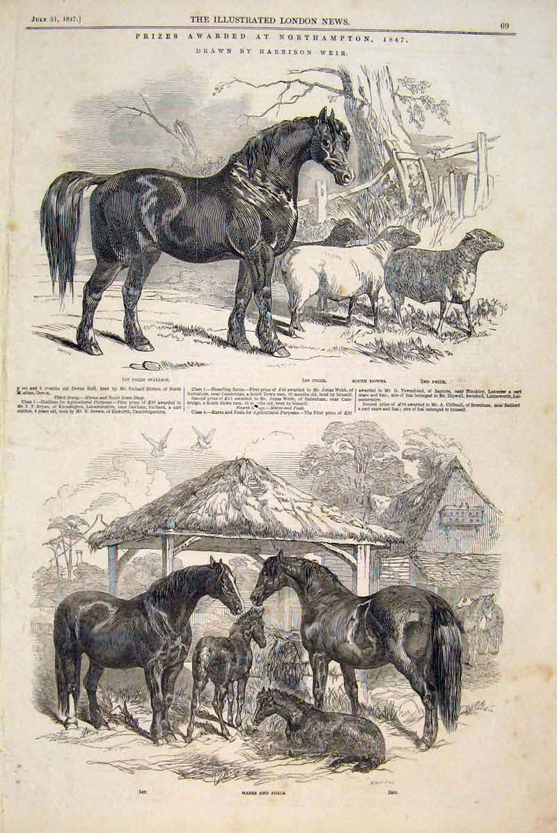 Print Notrhampton Weir Stallion Horses Mares Foal Sheep 1847 69Maa1 Old Original