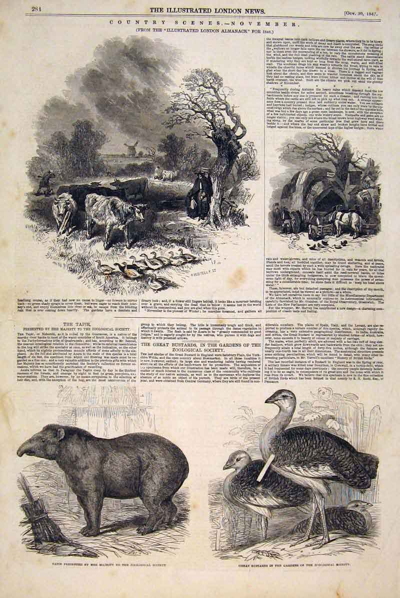 Print Woolwa Indian Bluefields River Mosquitia Council 1847 81Maa1 Old Original
