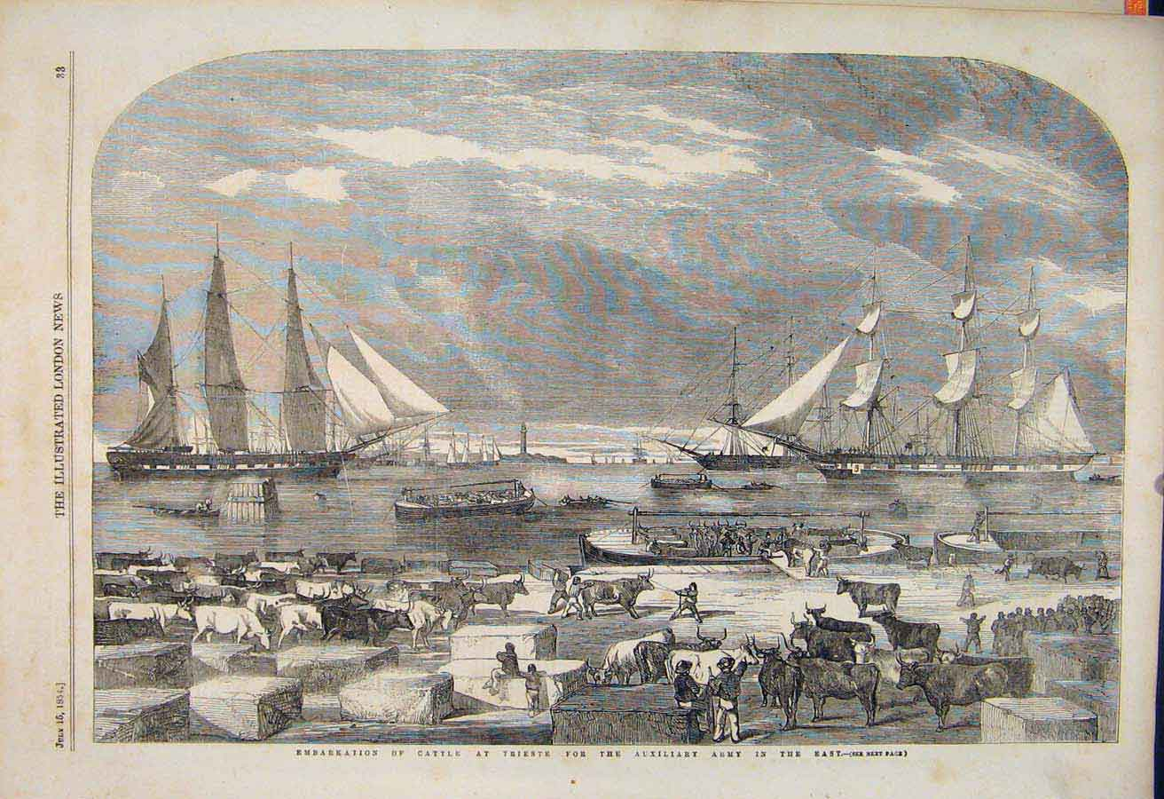 Print Cattle Trieste Auxillery Army Military 1854 33Maa1 Old Original