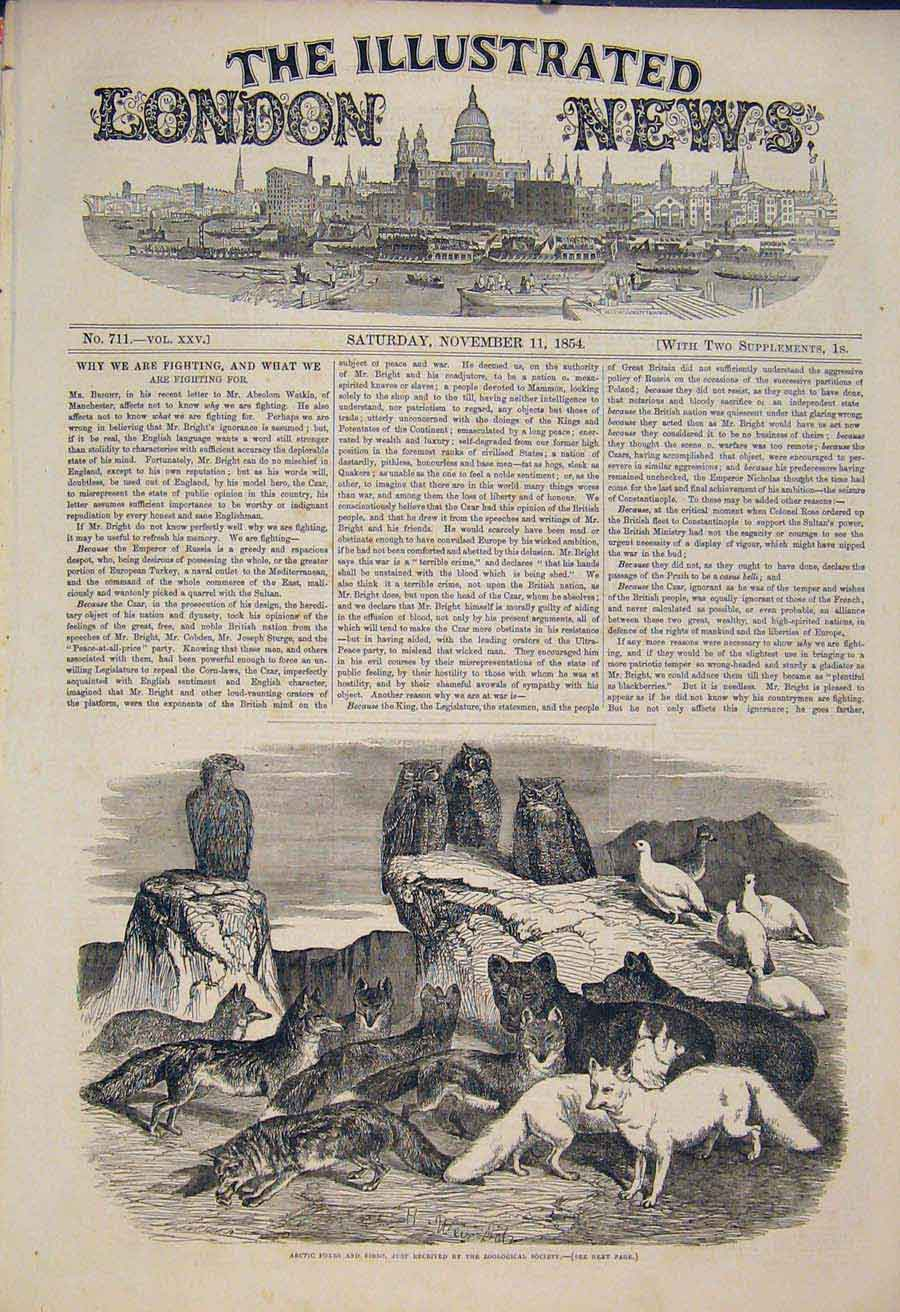 Print Arctic Foxes Fox Bird Birds Zoo London Owl 1854 54Maa1 Old Original