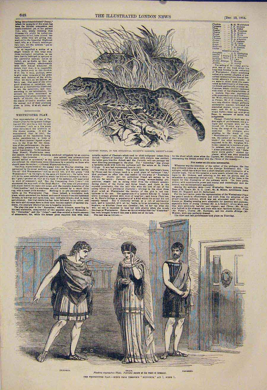 Print Tiger Tigers Zoo London Westminster Theatre 1854 48Maa1 Old Original