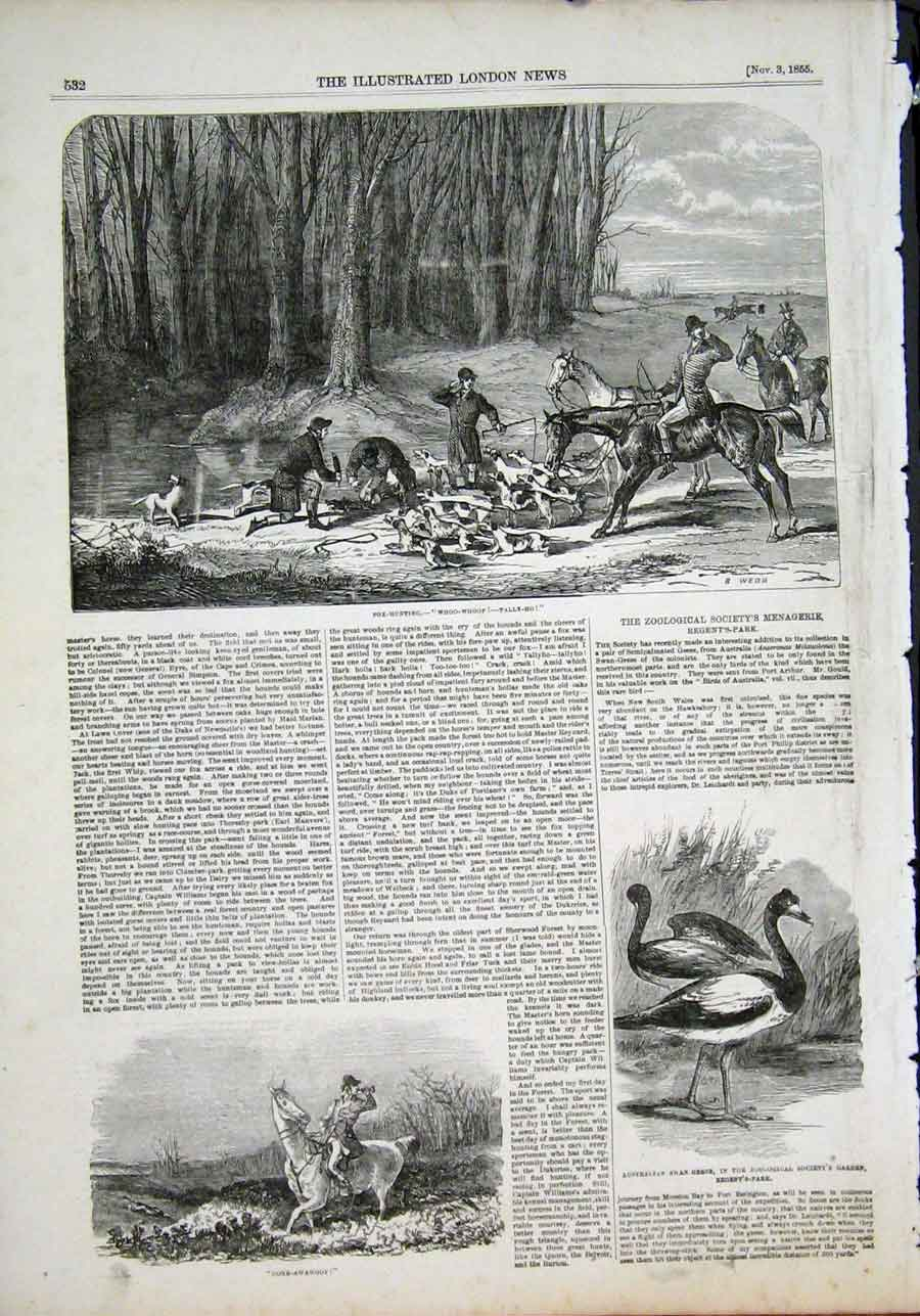 Print Fox Hunting Hunt Hounds Australian Swan Geese Zoo 1855 32Maa1 Old Original