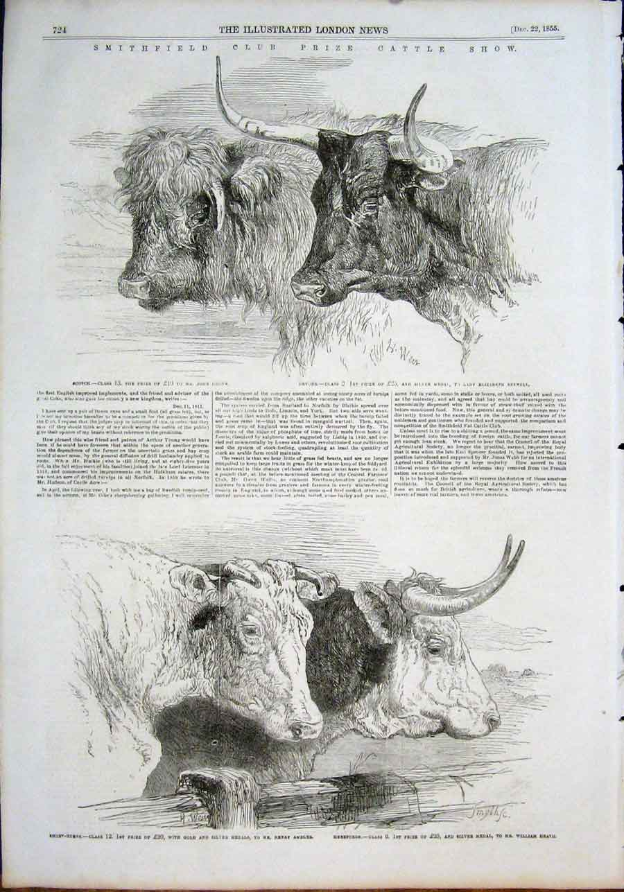 Print Smithfield Cattle Scotch Devons Short Horns Herefords 24Maa1 Old Original