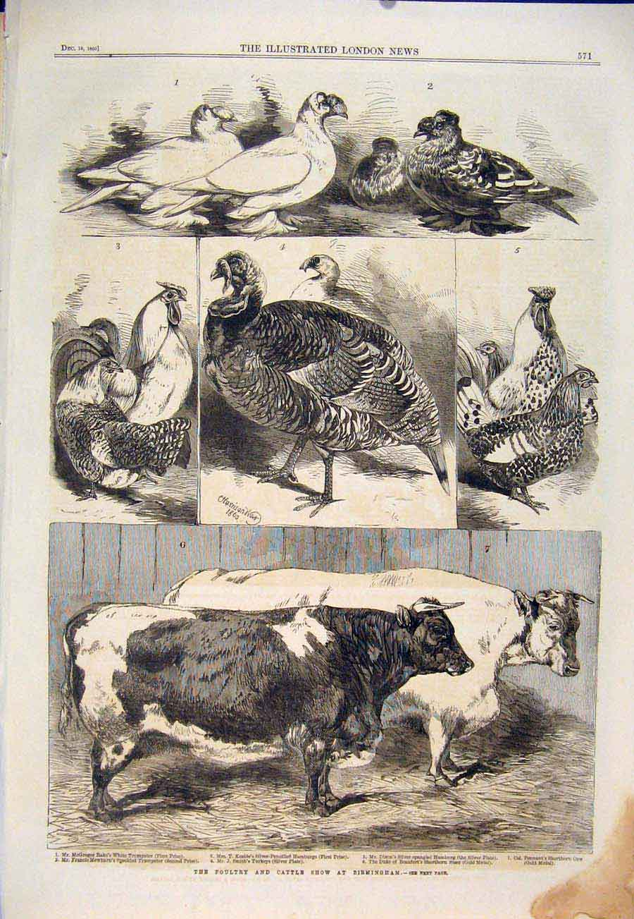 Print Poultry Cattle Show Birmingham Cow Turkey 1860 71Maa1 Old Original