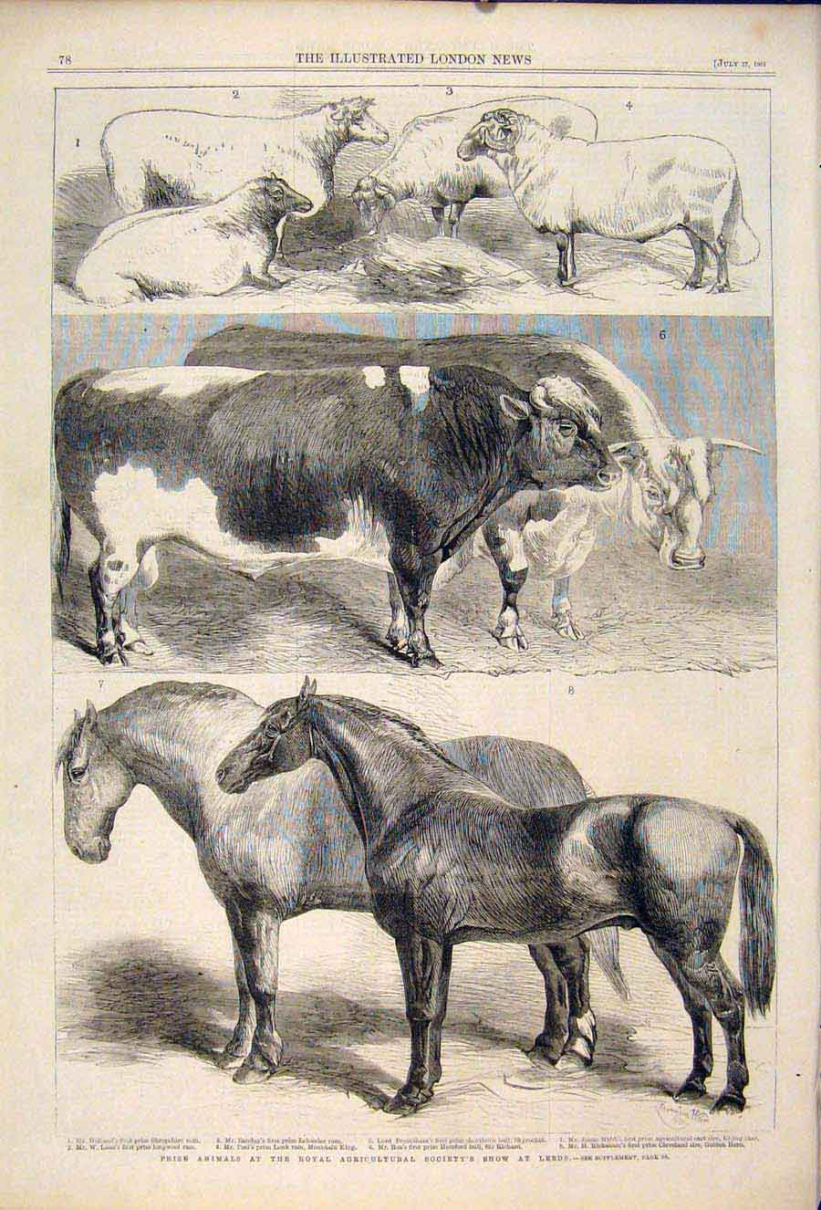 Print Royal Agricultural Show Leeds Horse Cattle Sheep 1861 78Maa1 Old Original