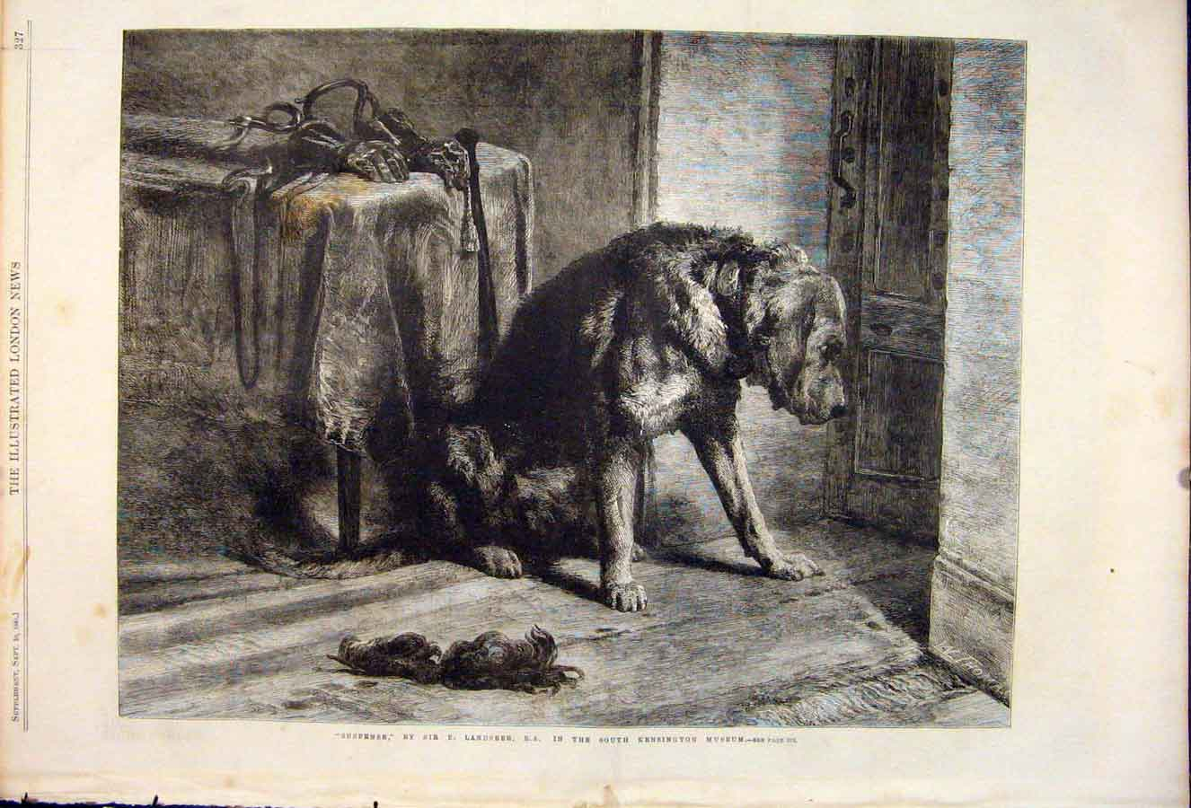 Print Suspense Dog Dogs Hound Landseer Kensington Museum 1861 27Maa1 Old Original
