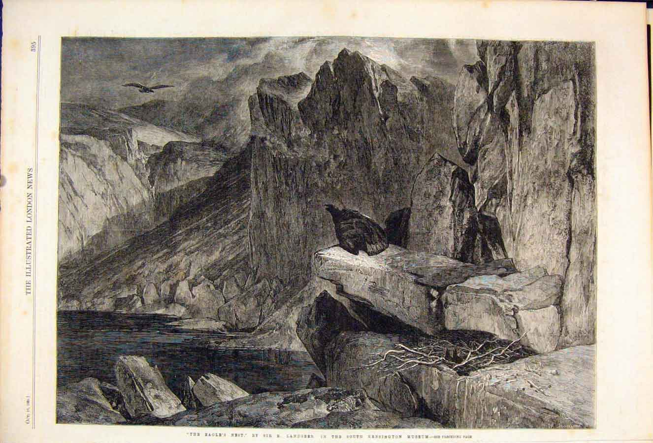 Print Eagle'S Nest Landseer Kensington Museum Bird Birds 1861 95Maa1 Old Original