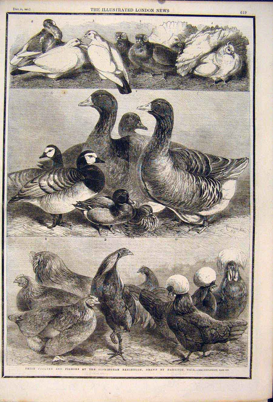 Print Poultry Pigeons Birmingham Exibition Harrison Weir 1861 19Maa1 Old Original