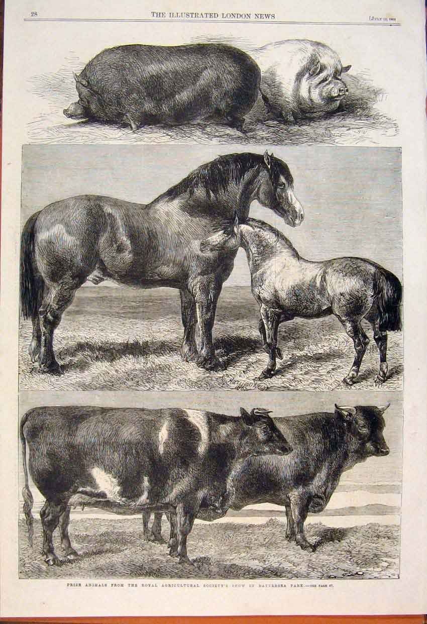 Print Animals Royal Agricultural Show Battersea Cow Horse Pig 28Maa1 Old Original