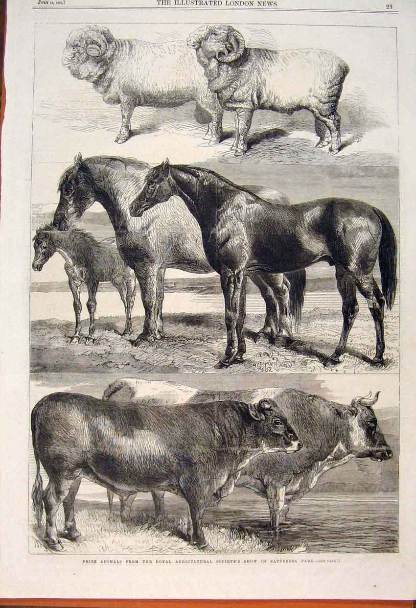 Print Royal Agricultural Show Battersea Cow Horse Sheep 1862 29Maa1 Old Original