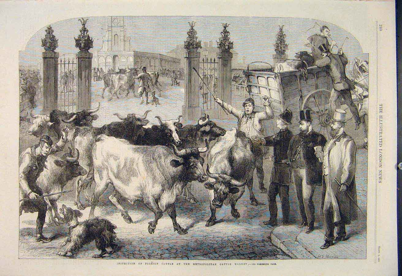 Print Foreign Cattle Metropolitan Market Inspection 1865 40Maa1 Old Original