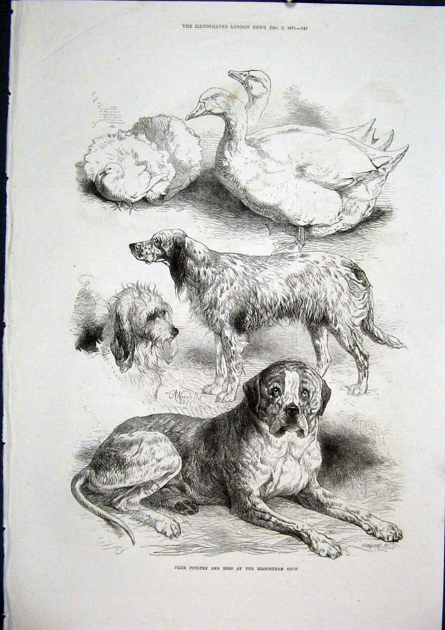 Print Poultry Dogs Birmingham Show Fine Art 1871 45Maa1 Old Original