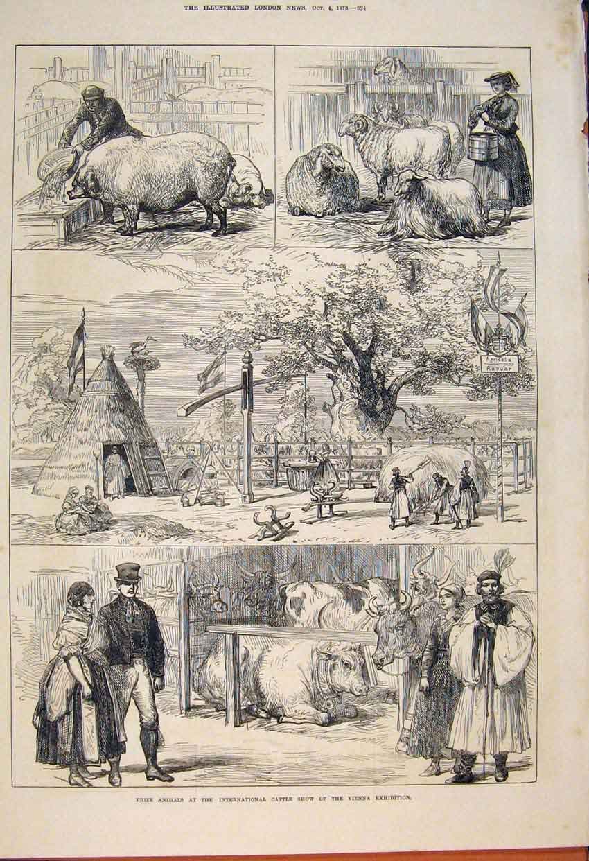 Print Prize Animalsinternational Cattle Show Vienna 1873 24Maa1 Old Original