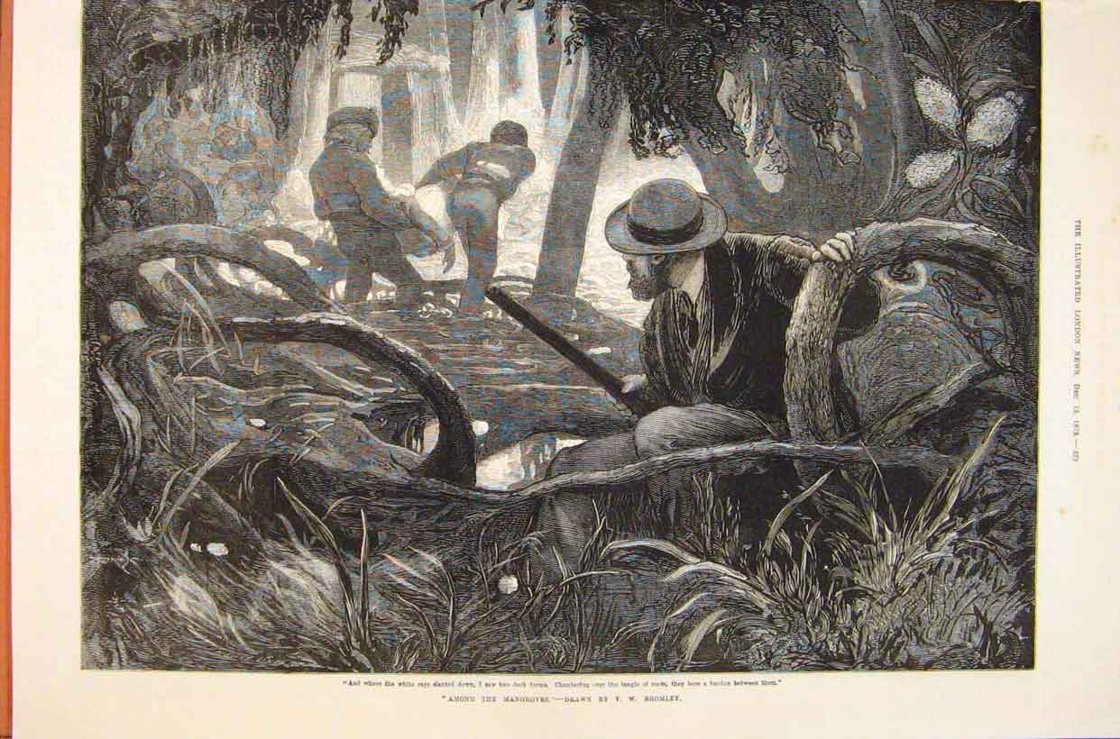 Print Mangrove Swamps Bromley People 1873 73Maa1 Old Original