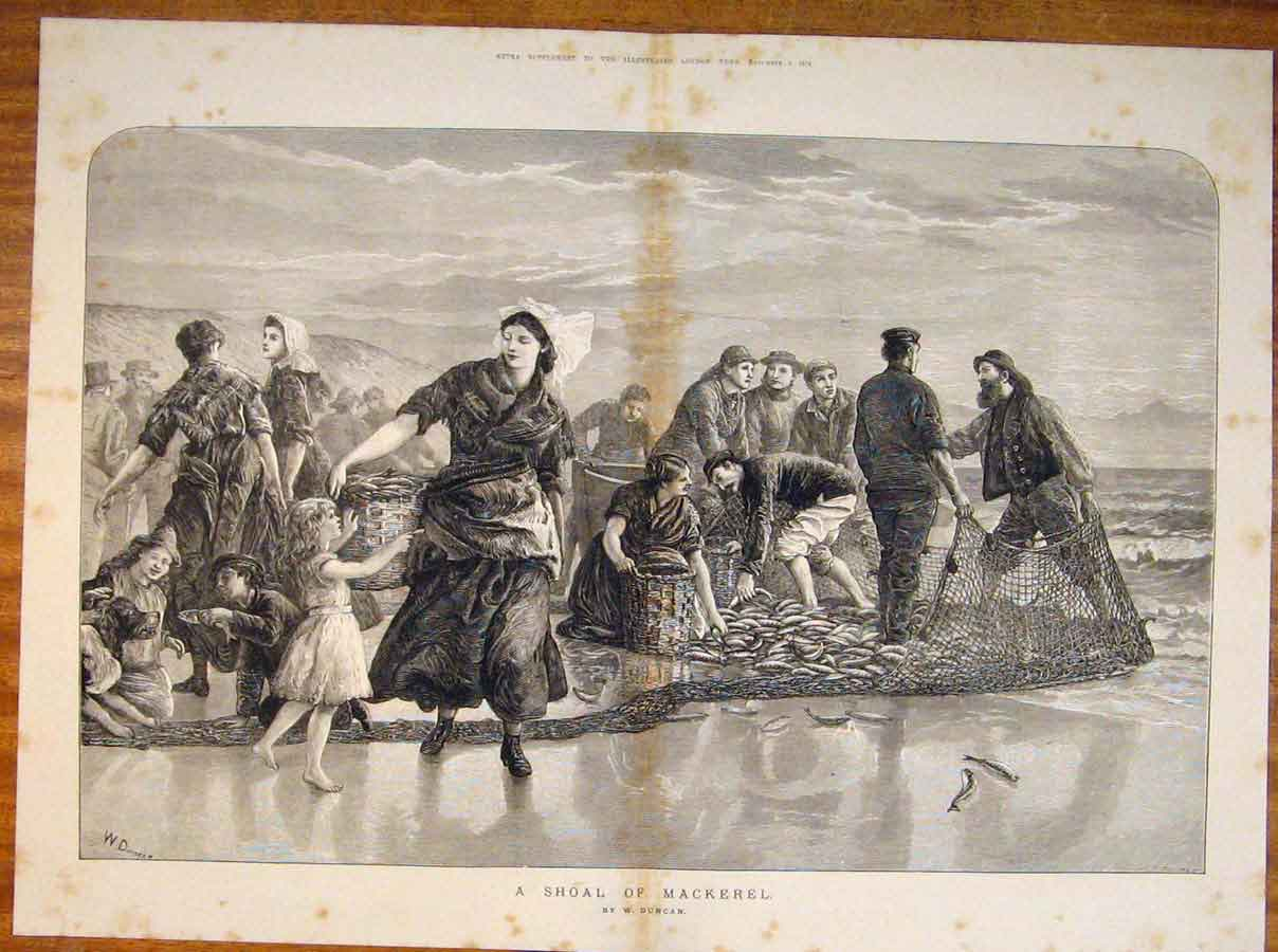 Print Shoal Mackerel Duncan Beach Fish Netting Fine Art 1873 05Tmaa1 Old Original