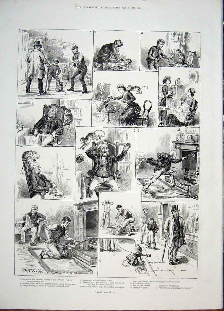 Print Monkey Sketches Grandpapa Fine Art 1885 20Maa1 Old Original