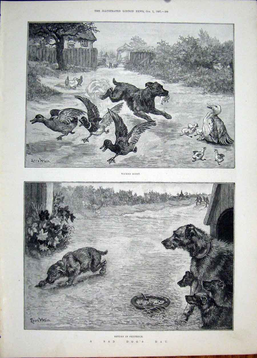 Print Sad Dog Day Wain Ducks Duckling Puppy Fine Art 1887 99Maa1 Old Original