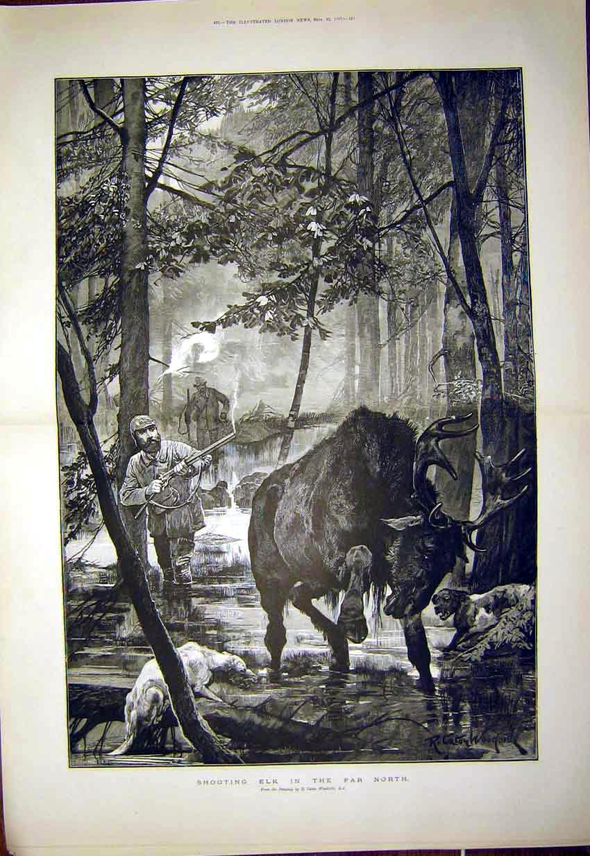 Print Elk Shooting Hunt Animal Woodville Dogs 1897 21Tmaa1 Old Original