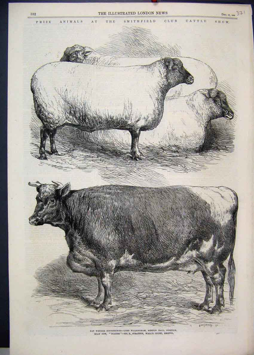 [Print 1866 Smithfield Club Cattle Show Wether Southdowns 21Mar1 Old Original]