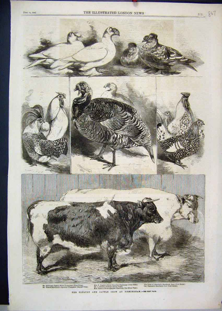 [Print 1880 Poultry Cattle Show Cow Turkey Shorthorn 67Mar1 Old Original]