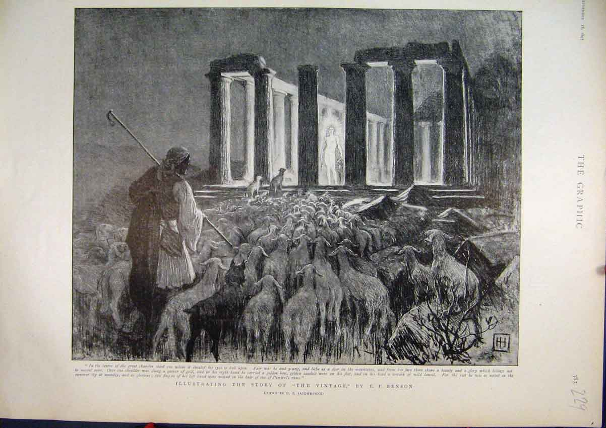 Print Story 1897 Benson Chamber Sheep 29Mar1 Old Original