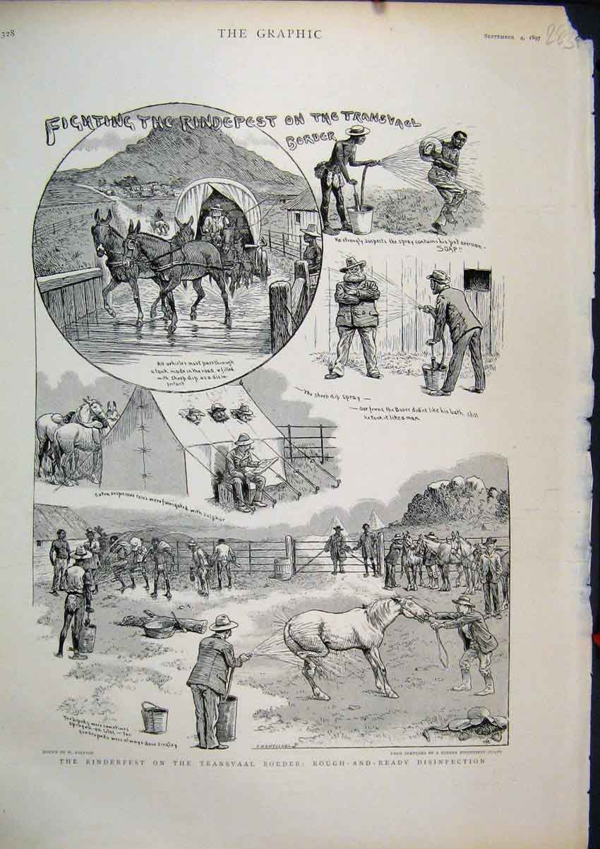 Print 1897 Rinderpest Transvaal Border Horse Disinfection 83Mar1 Old Original