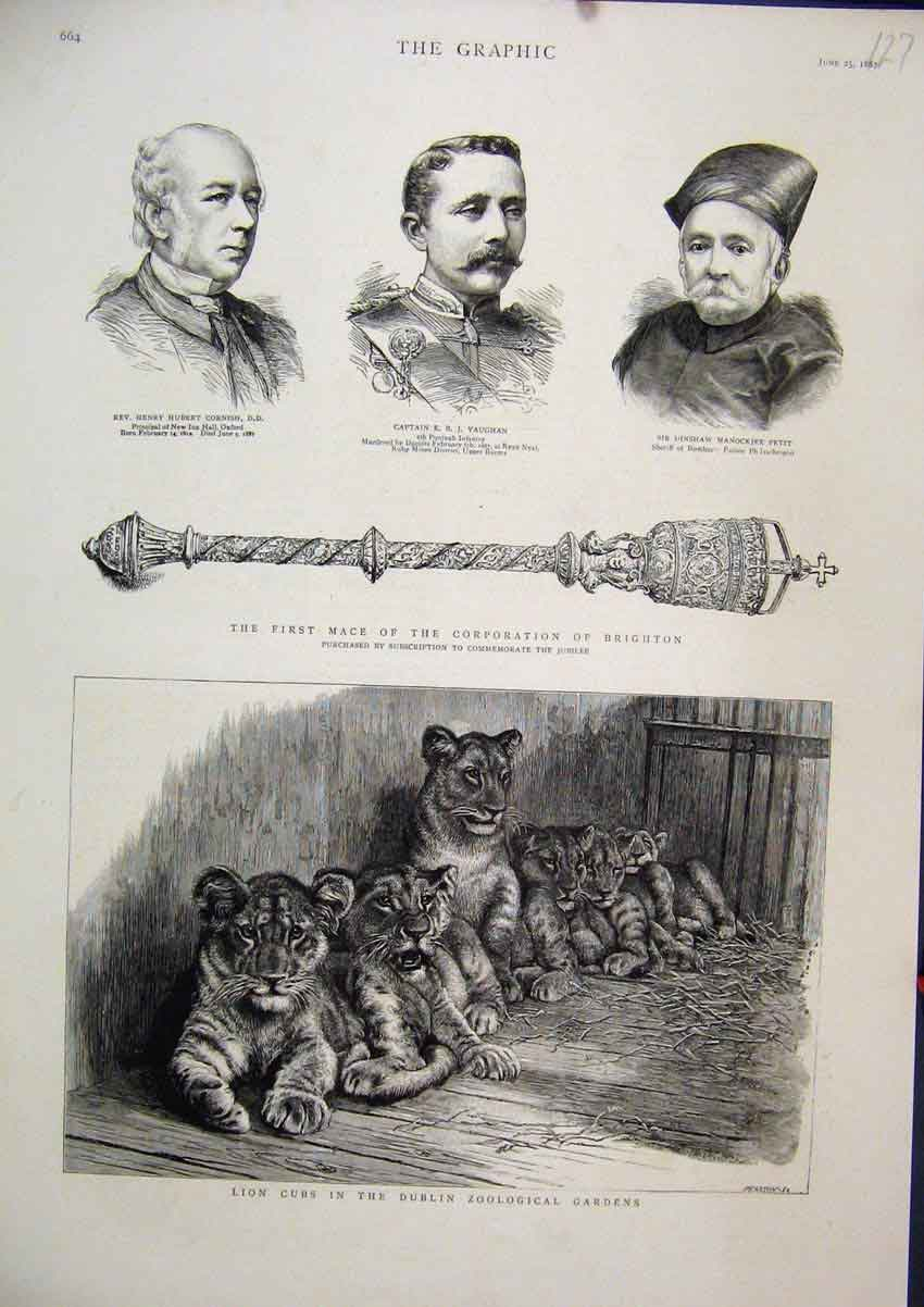 Print 1887 Lion Cubs Dublin Zoological Gardens Mace Brighton 27Mar1 Old Original