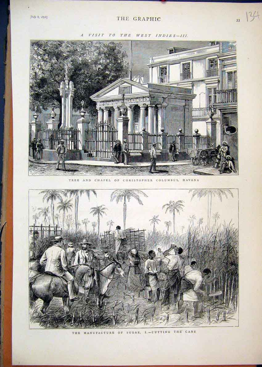 Print West Indies 1876 Tree Chapel Christopher Columbus Cane 34Mar1 Old Original