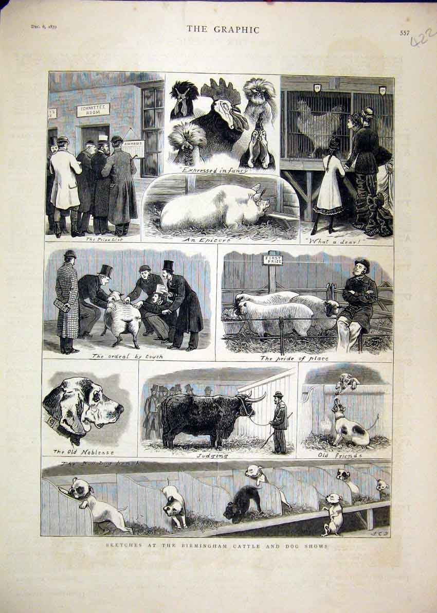 [Print Birmingham Cattle Dog Show 1879 Sheep Pigs Cockerel 22Mar1 Old Original]
