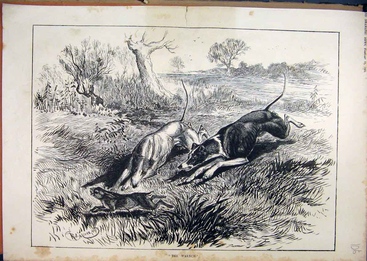 Print 1882 Dogs Hounds Hunting Hare Sport Running Country 06Mar1 Old Original