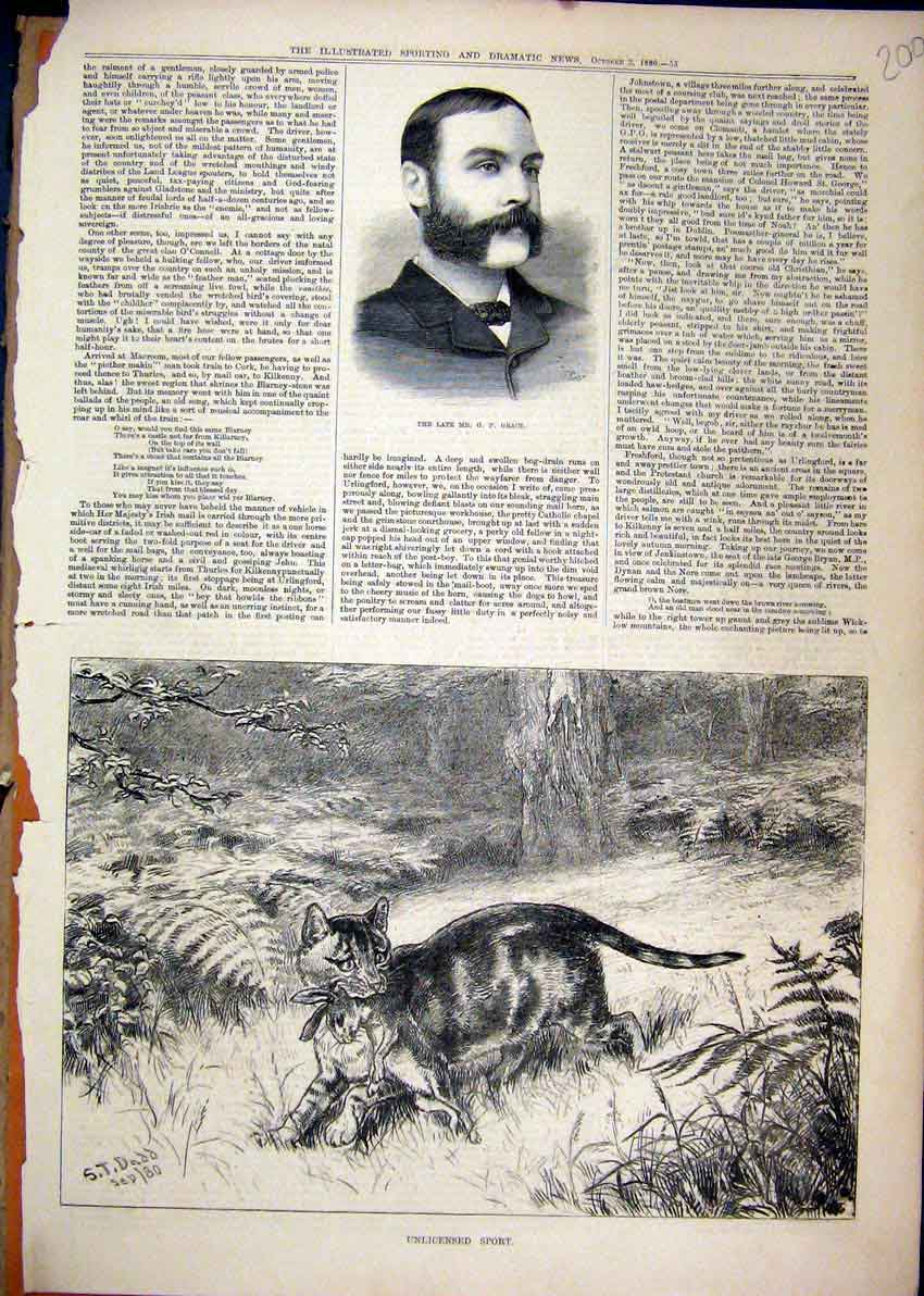 Print Portrait Late Grace 1880 Cat Hunting Rabbit Country 00Mar1 Old Original